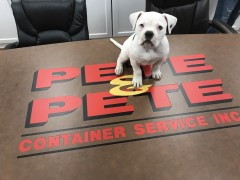 Enzo was employee of the month!